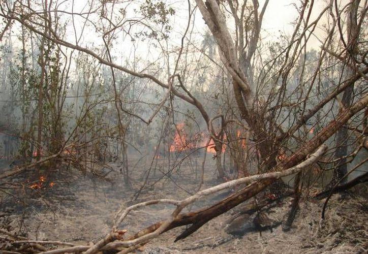 """El nuevo incendio de Benito Juárez se denomina """"Los Cocos"""" y se ubica a 228 kilómetros de la carretera federal Cancún-Mérida. (Redacción/SIPSE)"""