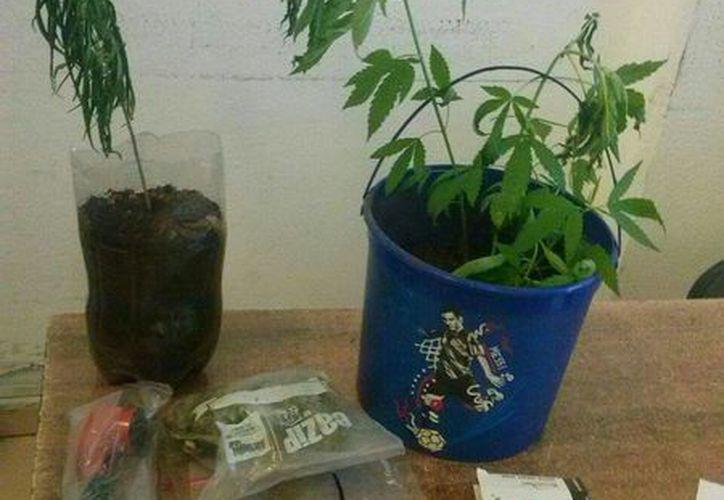 Se encontraron dos plantas de marihuana, un envoltorio de plástico con hierba seca, dos pipas para fumar y una báscula. (Redacción/SIPSE)