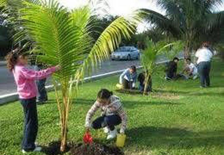 En la actividad participaron 40 personas entre trabajadores municipales y una asociación civil. (Archivo/SIPSE)