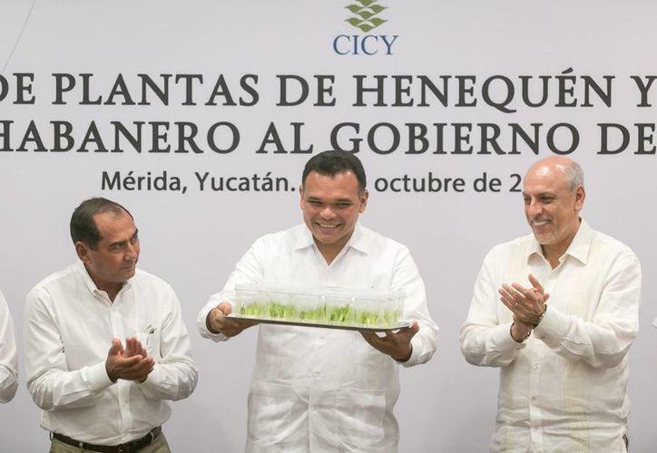 El gobernador Rolando Zapata Bello recibió del CICY 60 plantas de henequén obtenidas in vitro y 4 kilos de semillas de chile habanero. (SIPSE)