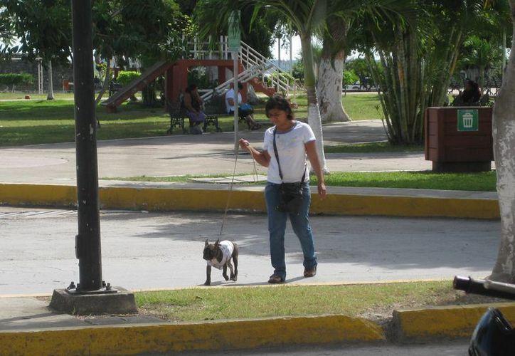 De manera periódica se están llevando a cabo programas de cirugías para esterilizar mascotas. (Javier Ortiz/SIPSE)
