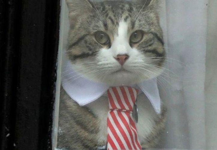 James fue retirado de la sede diplomática antes de que el fundador de Wikileaks fuera detenido. (Foto: Internet)