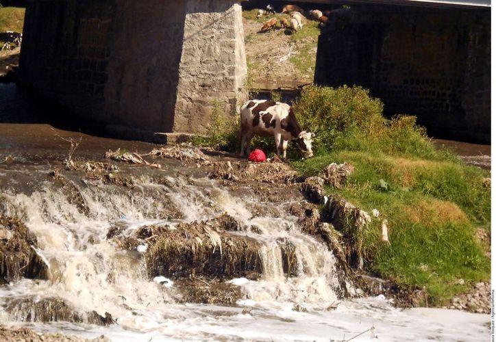 Los ríos en Tlaxcala lucen contaminados debido a los desechos químicos vertidos en ellos. (Reforma)