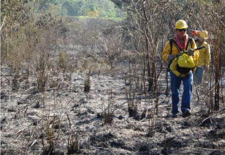 De ser encontrado culpable el ejido por la quema de estas tierras, podría ser sancionado con 20 años de veda para no poder explotarlas de ninguna manera. (Redacción/SIPSE)