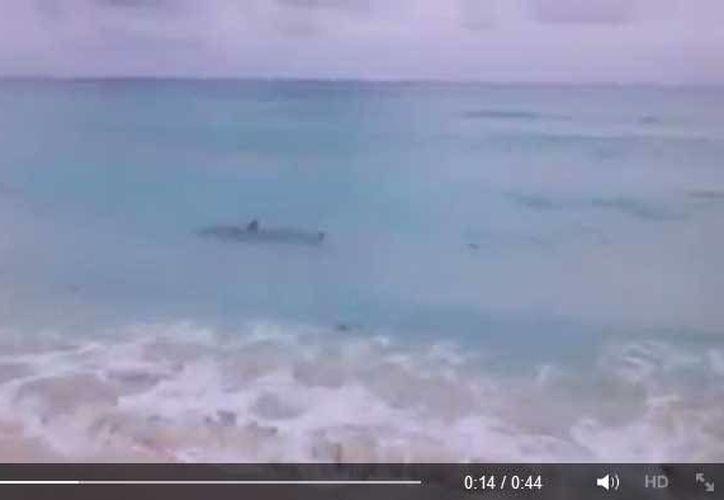 Usuarios de Facebook dieron a conocer el video sobre la presencia de un tiburón en playa Delfines. (Facebook/Rubén Díaz)