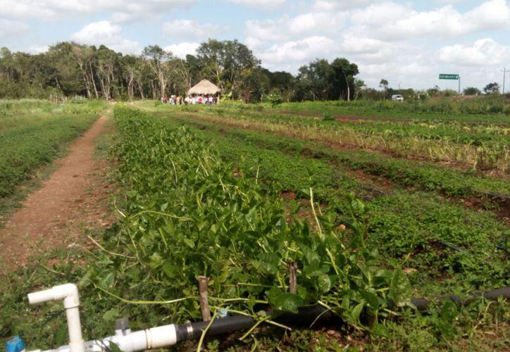 Los agricultores afirman que ganaron algo que no pidieron, pues no buscan una consulta, sino anular el permiso de la empresa.