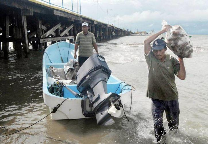 La langosta que se pesca en Yucatán se destina principalmente a la Riviera Maya, Europa y Estados Unidos. Imagen de contexto de la pesca del molusco, en el mar Caribe. (dominio.ips.org)