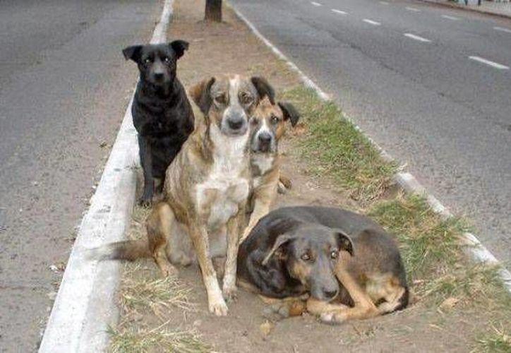 Según la asociación Renacer Contigo, muchas personas ven con desdén a los canes de la calle. (Redacción/SIPSE)