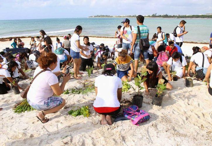 A partir de agosto próximo se efectuará una segunda fase de reforestación en las playas. (Contexto/Internet)