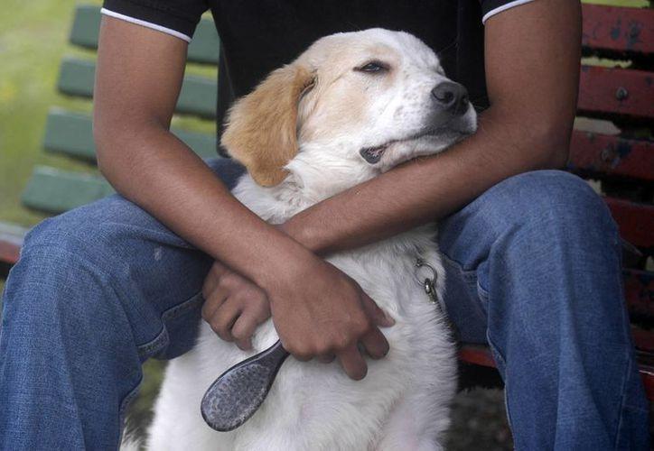 Aumenta la presencia de la hormona oxitocina cuando un perro y su amo se miran por unos instantes. (EFE/Archivo)