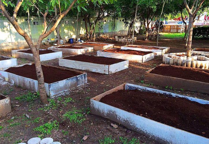Los habitantes del fraccionamiento Villamar 1 trabajan en 17 camas de siembra. (Daniel Pacheco/SIPSE)