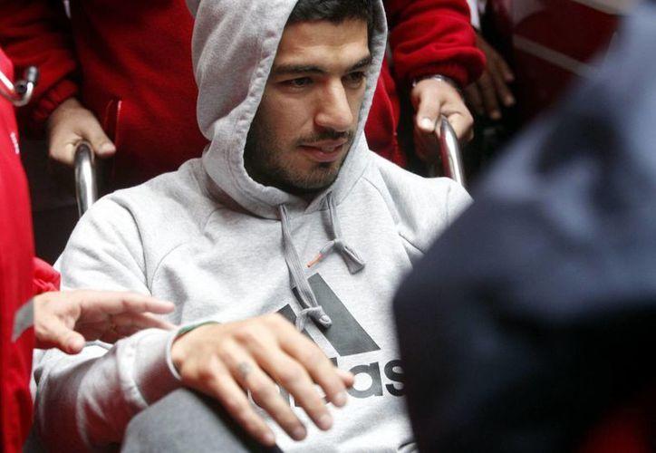 Algunos pesimistas consideran que Suárez no estará listo para defender la camiseta uruguaya en el Mundial de Brasil. (EFE)