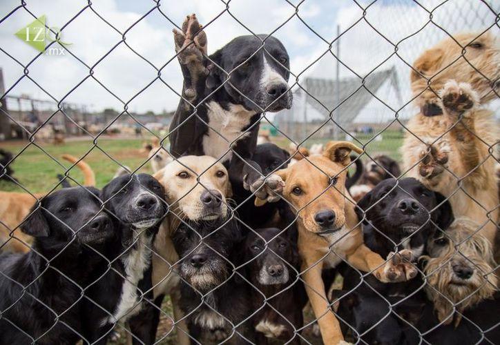 Lo recaudado se usará para operaciones a perros y gatos de manera gratuita. (Foto: Contexto)