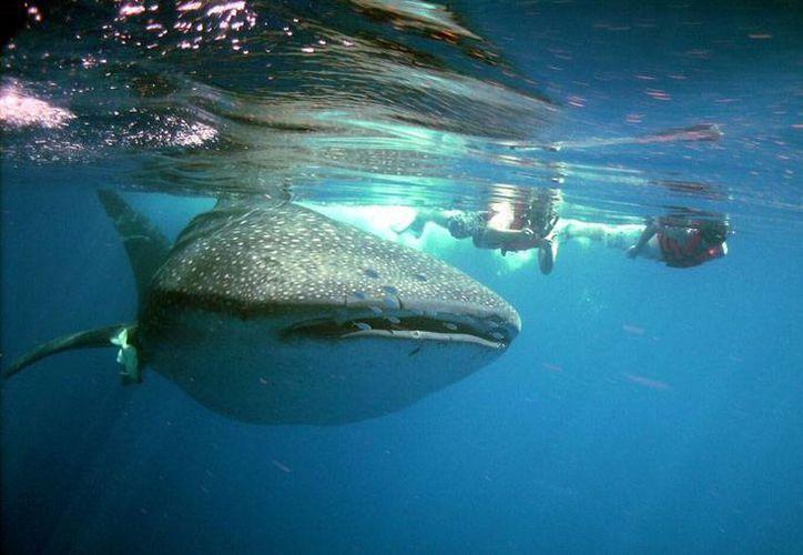 La Reserva de la Biósfera del Tiburón Ballena es una de las áreas protegidas que se busca preservar en la región. (Contexto/Internet)