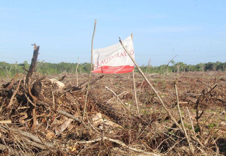 La zona devastada se ubica dentro del ejido Aarón Merino Fernández. (Javier Ortiz/SIPSE)