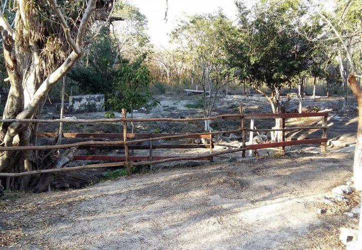 Entrada de uno de los varios cenotes que hay en Cuzamá. En un lugar así se desarrolló un enfrentamiento entre una bruja y un ser maligno. (Jorge Moreno/Milenio Novedades)