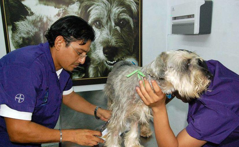 Los propietarios deben buscar lugares en los que estén a cargo o como responsables un médico veterinario. (Milenio Novedades)