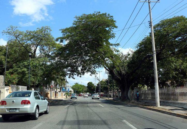 Las obras consideran el retiro del cableado en toda la Avenida Colón (foto), que inicia en la Avenida Itzaes y finaliza en el Paseo de Montejo. (Milenio Novedades)