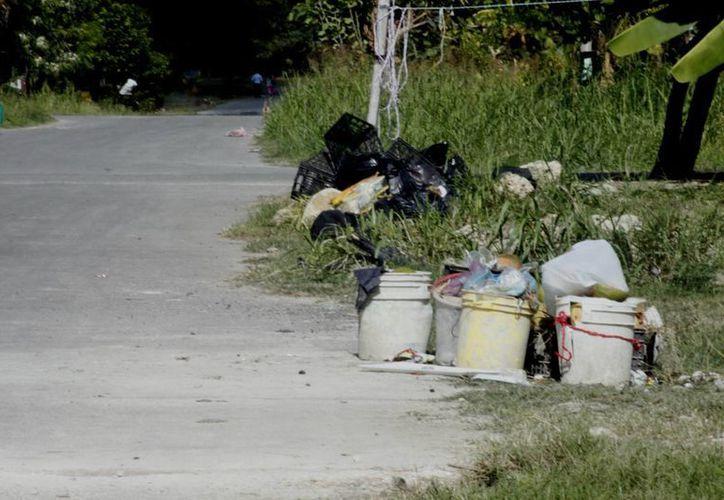 La colonia Arboledas se inunda de desperdicios por la nula recolecta de la dirección de Servicios Públicos municipales. (Enrique Mena/SIPSE)
