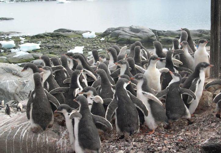 Puerto Lockroy es uno de los puntos más australes del planeta y no cuenta con internet, señal telefónica o algún otro tipo de comunicación. (Facebook/UK Antarctic Heritage Trust)