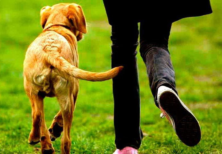 La cola de un perro no es solo la prolongación de su columna vertebral. (Mundo perro)