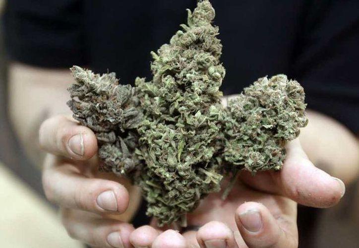 La iniciativa propone permitir a las personas de 21 años o mayores la posesión de hasta una onza de marihuana (28 gramos) y sembrar hasta cinco plantas para uso personal. (Agencias)