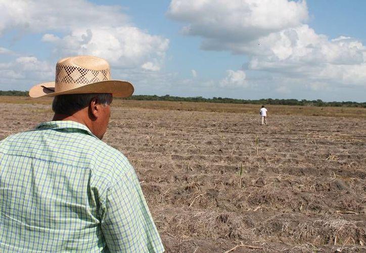 Tres mil productores agropecuarios y campesinos esperan no ser rehenes de los partidos políticos. (Edgardo Rodríguez/SIPSE)