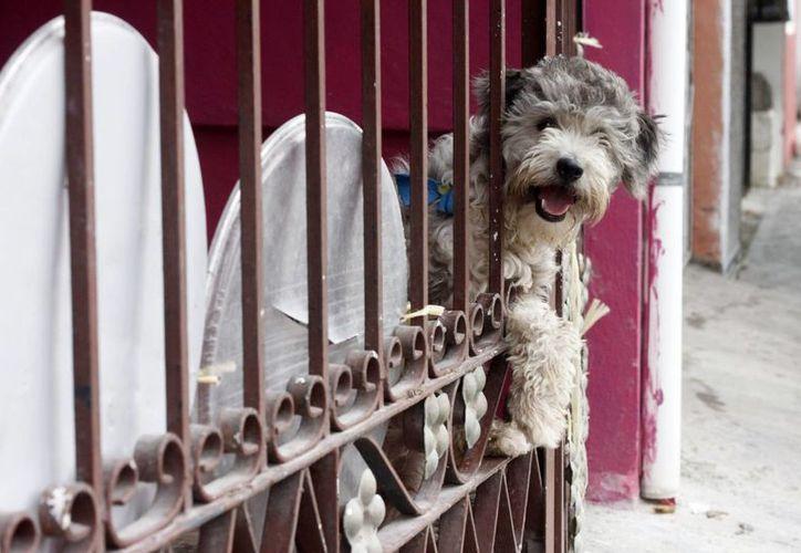 El castigo va de seis meses a un año de prisión, si el maltrato no pone en peligro la vida del animal. (Harold Alcocer/SIPSE)