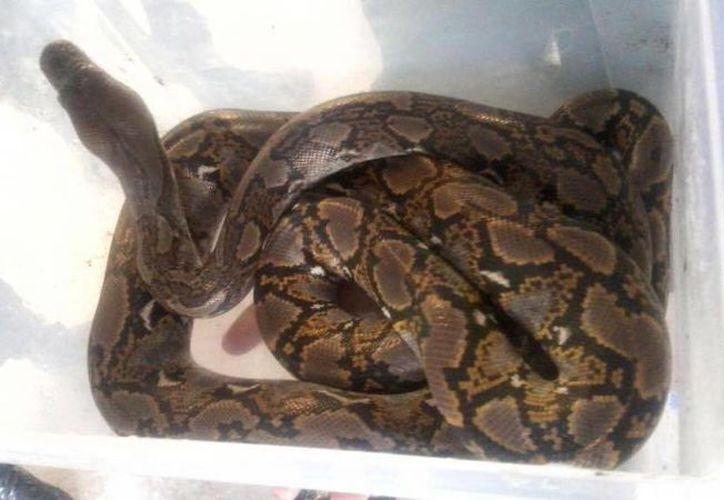 Policías aseguraron una víbora y otros reptiles en las instalaciones del Metro. (Facebook/Sistema de Transporte Colectivo Metro. Sitio oficial)