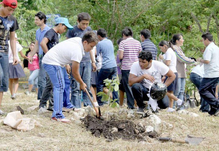 Este sábado habrá reforestación en la zona de Chuburná. (SIPSE)