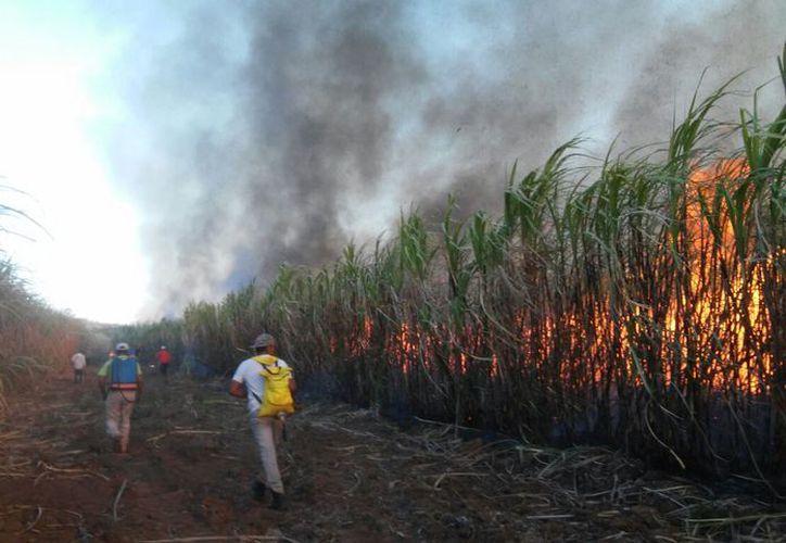 Los descuentos afectan directamente al productor quienes consideran que muchas de las quemas son accidentales. (Carlos Castillo/SIPSE)