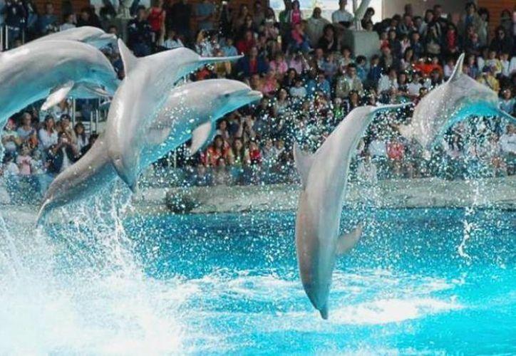 Se pretende realizar reuniones con empresarios que ofrecen espectáculos con delfines, para poder determinar las condiciones en las que éstos viven. (Foto de Contexto/Internet)