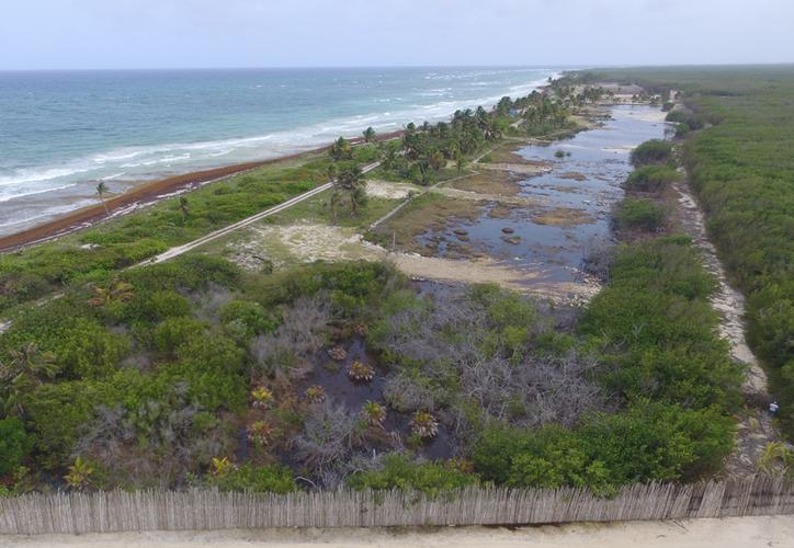 Según representantes de asociaciones, el área ya había sido clausurada por la Procuraduría Federal de Protección al Ambiente (Profepa), pero se desconoce cuáles fueron los términos, debido a que la clausura no detuvo los trabajos. (Daniel Tejada/SIPSE)
