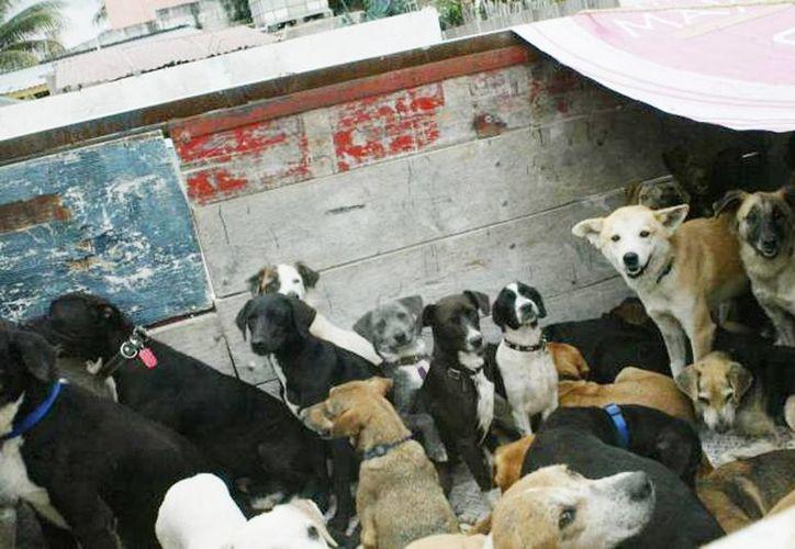 El veneno llamado 1080 fue el causante de la muerte de 10 perros en Ciudad Madero, Tamaulipas. (Foto de archivo SIPSE)