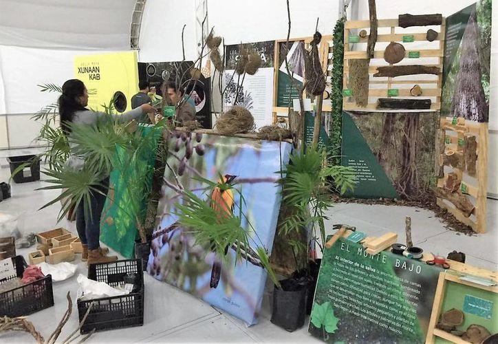 El Jardín Botánico de Puerto Morelos es la exposición estrella de la Semana Nacional de Ciencia y Tecnología. (Ángel Castilla/SIPSE)