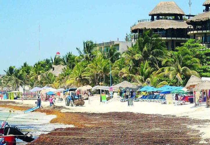 El sargazo empañó la temporada de verano en la Riviera Maya. (Redacción/SIPSE)