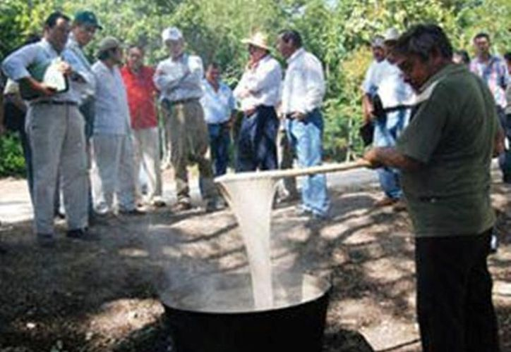 La extracción y elaboración de la goma biodegradable Chicza, a interesado al mercado europeo para incrementar sus ventas. (Juan Palma/SIPSE)