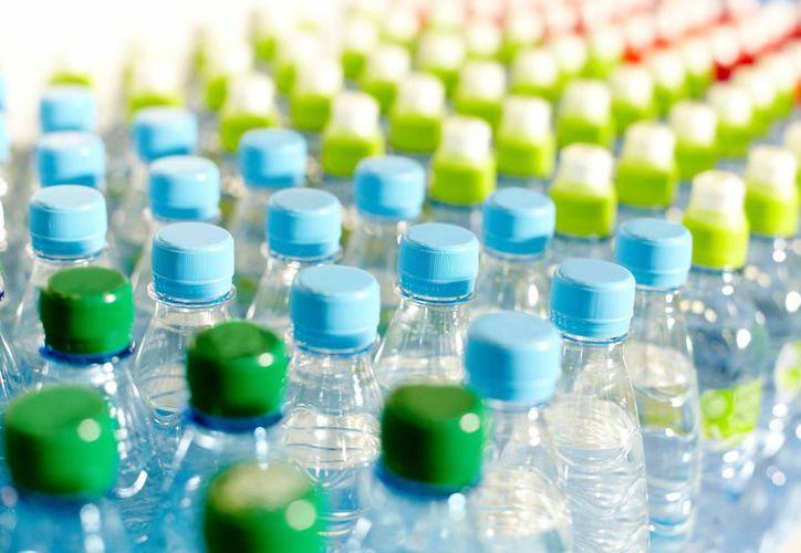 Una nueva edición de 'Plásticos X Planta' llegará a Cancún. (Contexto/Internet).