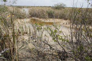 Anuncian restauración de manglares de Puerto Morelos