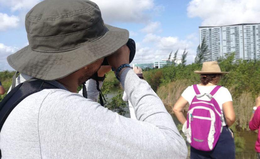 Los observadores documentaron la presencia de especies de aves, reptiles, insectos, manglares, entre otros, en Malecón Tajamar. (Karim Moisés/SIPSE)
