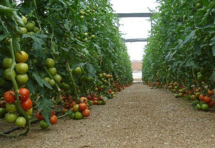 El sistema detecta cuando una planta necesita agua y enciende los rociadores. (Agencias)