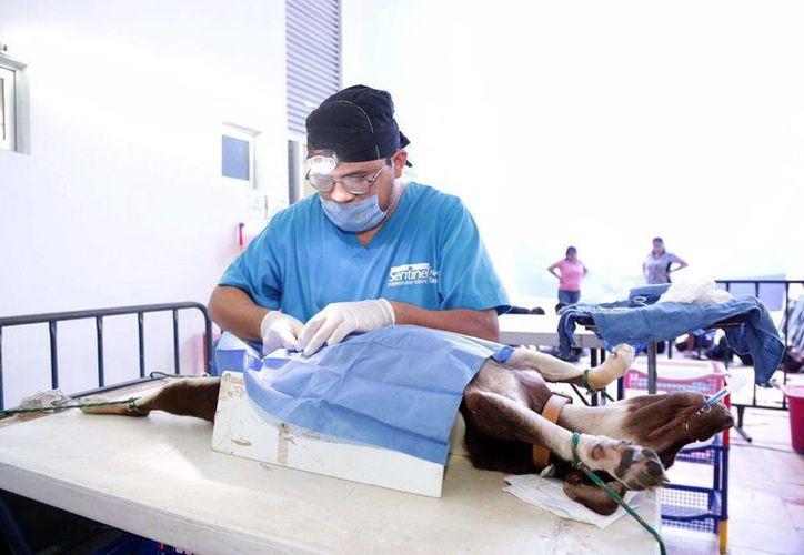 El módulo veterinario será para las familias de escasos recursos que tengan mascotas. (Milenio Novedades)