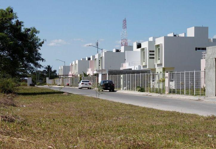 Piden respetar la vegetación de los alrededores de donde se construyan viviendas a gran escala. (Francisco Sansores/SIPSE)