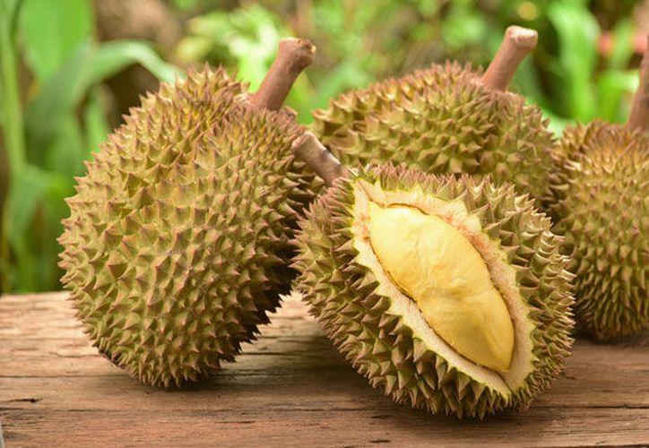 El durián crece en los árboles conocidos como durio y se encuentra presente en todo el sudeste asiático. (Emol)