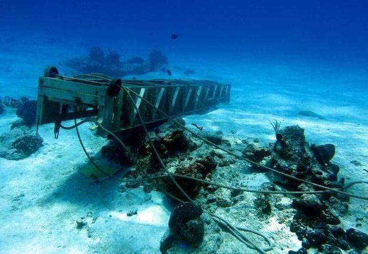 """La agrupación ambientalista Citymar denunció ante la Profepa que la ampliación del muelle """"Puerta Maya"""" está dañando al arrecife Paraíso. (Redacción/SIPSE)"""