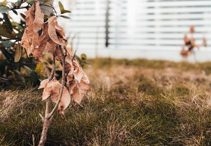 El propósito de la actual administración es plantar 100 mil árboles. (Adán Kent/Novedades Yucatán)