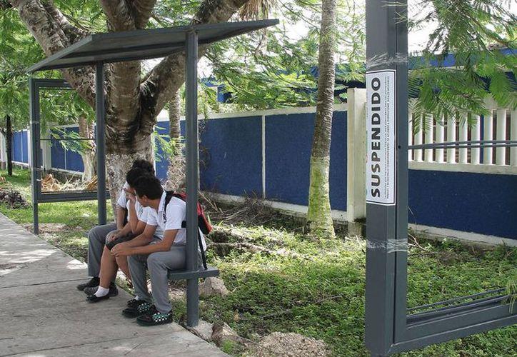 La concesionaria instaló 100 parabuses en diversos puntos de la ciudad. (Julián Miranda/SIPSE)