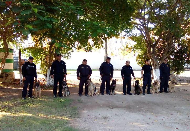 Los caninos son provenientes de la escuela Álvaro Rojas Ahumada de la Policía Nacional de Colombia. (Redacción)