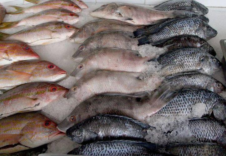 Se vigilan los alimentos a fin de proteger la salud de la población local y de los turistas. (Cortesía/SIPSE)