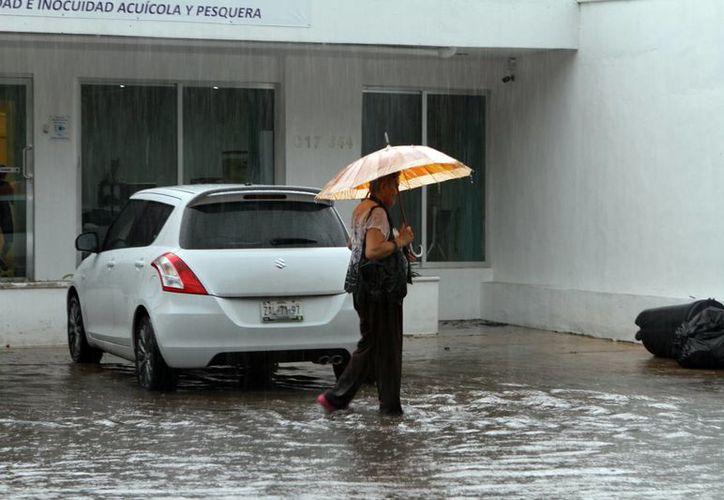 Torrencial lluvia bañó a toda la ciudad de Mérida ayer en horas de la tarde y generó cientos de calles inundadas, caos vial -sobre todo en el Centro- y hasta viviendas en problemas por el exceso de agua. (SIPSE)
